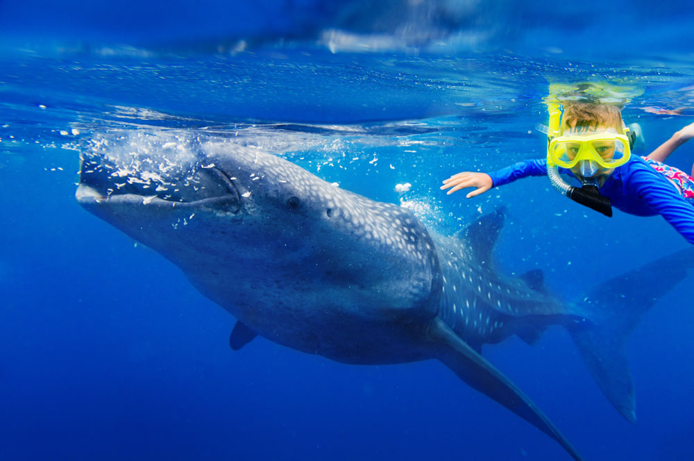 whale-sharks-package