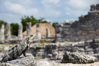 Visit the El Rey Ruins in Cancun
